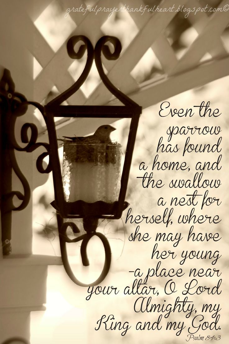 Even the sparrow has found a home, And the swallow a nest for herself, Where she may lay her young-- Even Your altars, O LORD of hosts, My King and my God. [Psalm 84:3]