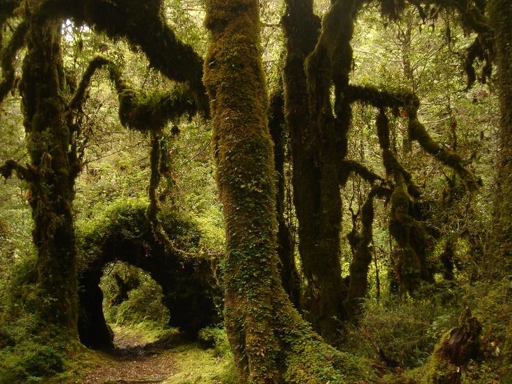 Parque Nacional Hornopiren, Chile