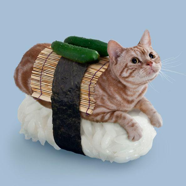 We need Cat!Sushi! #Neko-Sushi Postcards   White Rabbit Express