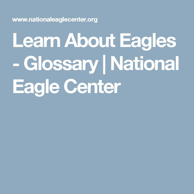 Learn About Eagles - Glossary     National Eagle Center