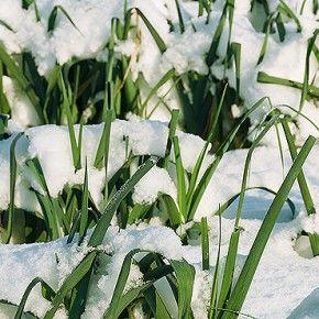 Взимку нашому організму потрібно більше енергії для боротьби з холодом і хворобами. Дізнайтесь, як додати сили, не додавши зайвих кілограм та почуватися здоровими і бадьорими.