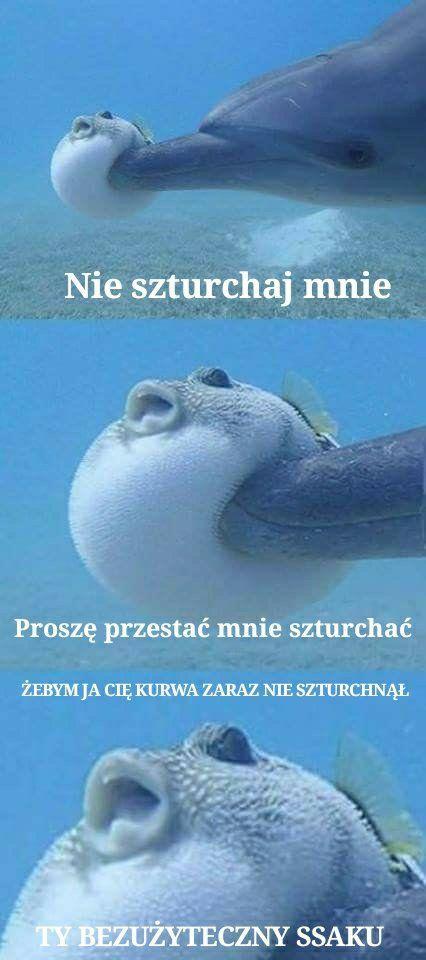 Repostuj.pl - 81 | proszę nie szturchać