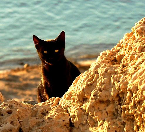 Some info - Black cats are considered good luck and will bring a sailor home from the sea. Black cats are considered lucky on the sea. Mostly this is believed to be the result of the opposite effect of land based superstition, where a black cat is unlucky. In fact, when women had husbands who were at sea would keep a black cat in their home to bring good luck to their husbands while they were on the ship, and these cats were so valuable they were often stolen.