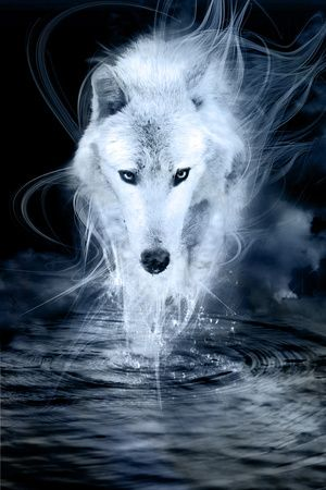Loups affiches sur AllPosters.fr