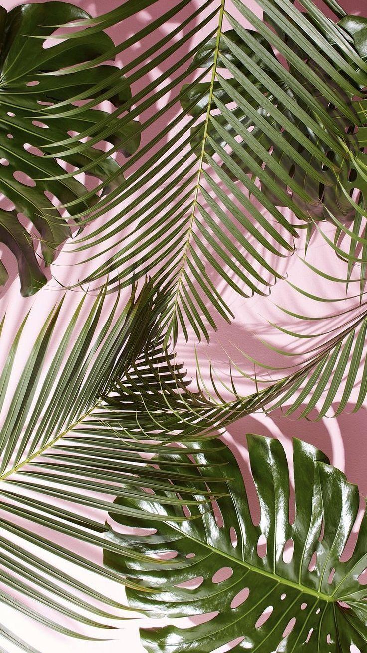 palm life – #fondos #Life #palm