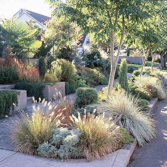 Foliage plants shine in this drought-tolerant garden. Many drought-tolerant plants offer less-showy blooms, but make up for it with interesting foliage, such as this Japanese bloodgrass. The combination of grass and concrete in many curb strips doesn't do much to stem water loss, but this planted version catches water before it hits the street. In place of grass, choose drought-tolerant plantings, which are more likely to prevent erosion. Shade, too, can be a necessary element in the fight…
