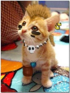 This is really cute. My cats would never have put up with this, tho'.