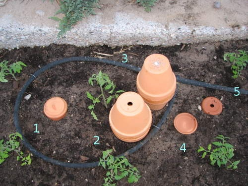 Another type of water Olla