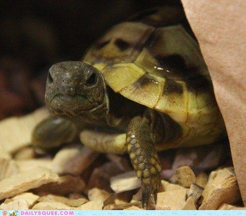 Doesn't he look grumpy-grumpy: Cute Animal, Finest Internet, Cheezburg With, Turtles 33, Enter, Crafts
