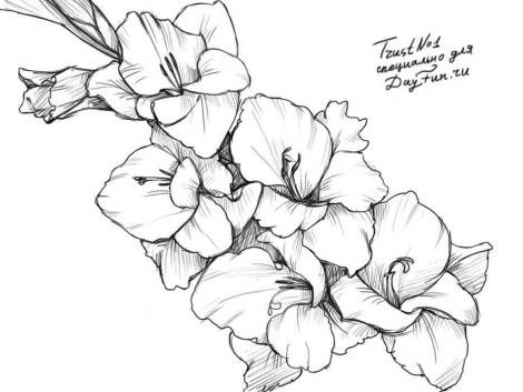How to draw a gladiolus step by step 5