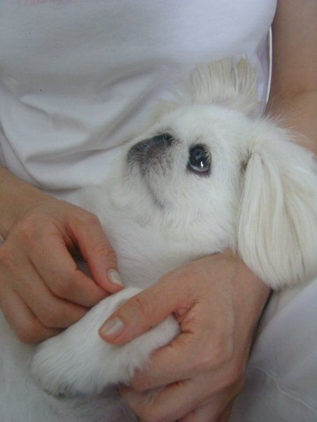 When coco first came to our house. She looks so lost <3  Follow my puppy dog