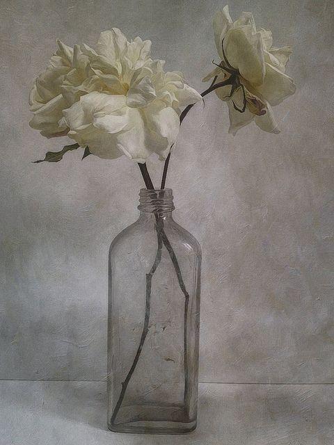 ❀ Blooming Brushwork ❀ - garden and still life flower paintings - White Roses by Sarah Jarrett, via Flickr