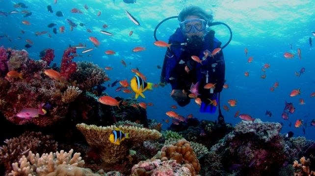Dive the breathtaking Philippines reefs   Liveboard Diving , Diving Travel Expedition   Combadi #diving #sea #philipinnes #underwater