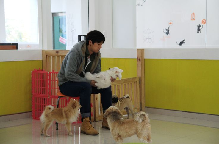 Entertainment facility : Cat and Dog cafe