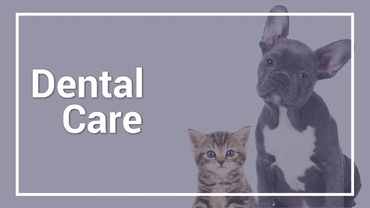 Dr. Greenway discusses the basic teeth cleaning process for dogs and cats and what you'll need if you plan to do it yourself. #dogs #cats #HCFP