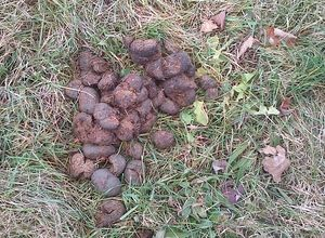 10 Things You Didn't Know About Horse Manure: Quantity and Weight
