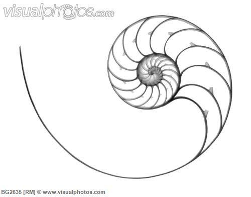 Line Art Nautilus : Images about nautilus shell on pinterest fibonacci