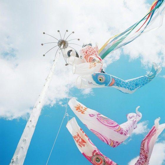Today's Japan Photo: Koinobori 鯉幟