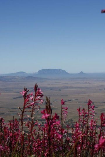 Views from the top of the Paardeberg towards table mountain.