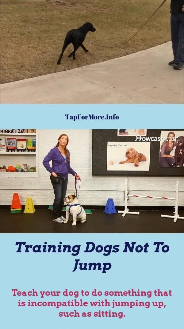 Stop Your Dog From Jumping Up Dog Training Easiest Dogs To