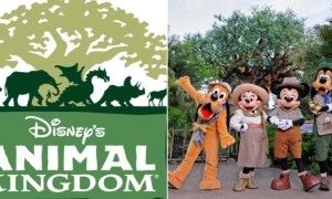 11 Awesome Facts About Disney World's Animal Kingdom - Posted on Roadtrippers.com!