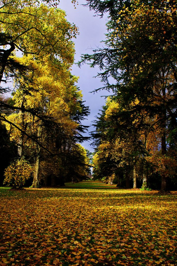 Westonbirt Arboretum - a 600-acre forest in the Cotswolds containing 2,500 species of trees. The 17 miles of accessible pathways criss-cross the Arboretum and are just begging to be explored. Autumn is THE time to visit when autumnal leaves combine to produce a kaleidoscope of colours to be enjoyed. Crunch your way through the fallen leaves and then head to Tetbury for a town packed full of traditional English charm