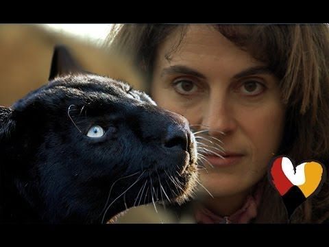 Black Leopard and The Animal Communicator, Anna  Breytenbach GREAT STORY WHETHER YOU TAKE IT AT FACE VALUE OR NOT--BEAUTIFUL