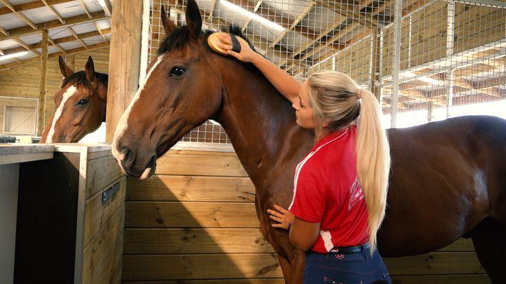 harrison lane stables