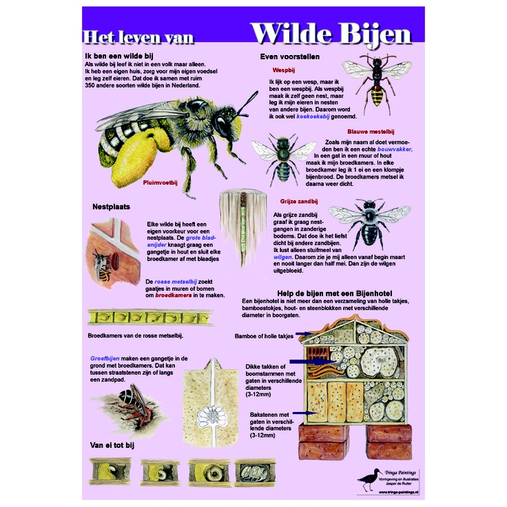 Poster Het leven van wilde bijen, formaat 84cm x 60cm, geplastificeerd, http://iturl.nl/snqAyC