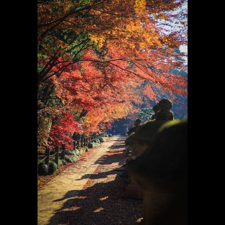 . . 今週せっかくの土日休み だからどこか行きたいな〜🌌 . . #canon#eos6d#6d#tokyocameraclub#lovers_nippon#loves_nippon#wu_japan#jp_gallery#ig_japan#ig_photography #team_jp_ #instaphotos#ig_photooftheday#team_jp_東#art_of_japan_#instagram #icu_japan#キャノン#一眼レフ#カメラ#お写んぽ#カメラ好きな人と繋がりたい#写真好きな人と繋がりた#東京カメラ部#キタムラ写真投稿#けしからん風景#平林寺#埼玉#紅葉#はなまっぷ紅葉2017