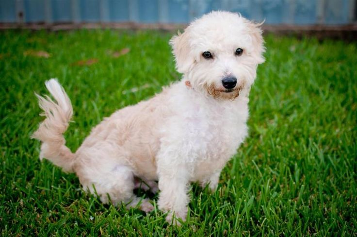 90f0bc7d05512c43bd41a3655436939f adopt a dog cotton