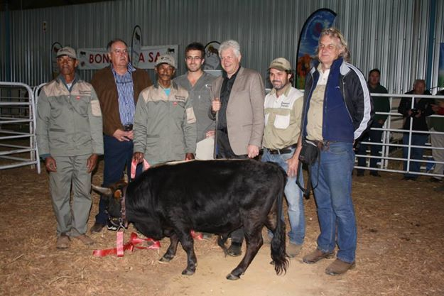 Official smallest bull in the world - entered into Genniuss Book of World Records