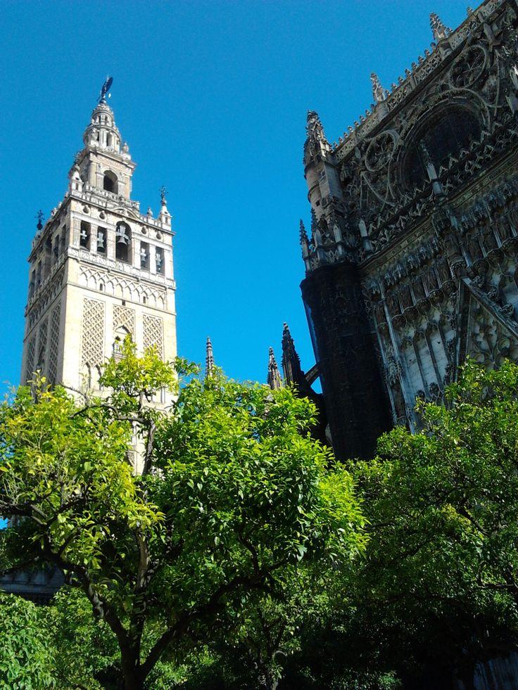 Catedral de Sevilla y Giralda en Primavera. The Cathedral of Seville and the Giralda Tower in Spring