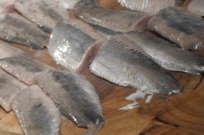 Hollandse Nieuwe: Haringweetjes van vangst tot consumptie