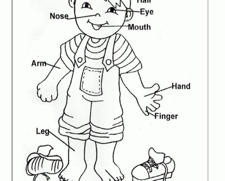 Human body parts coloring pages for kids - photo#41