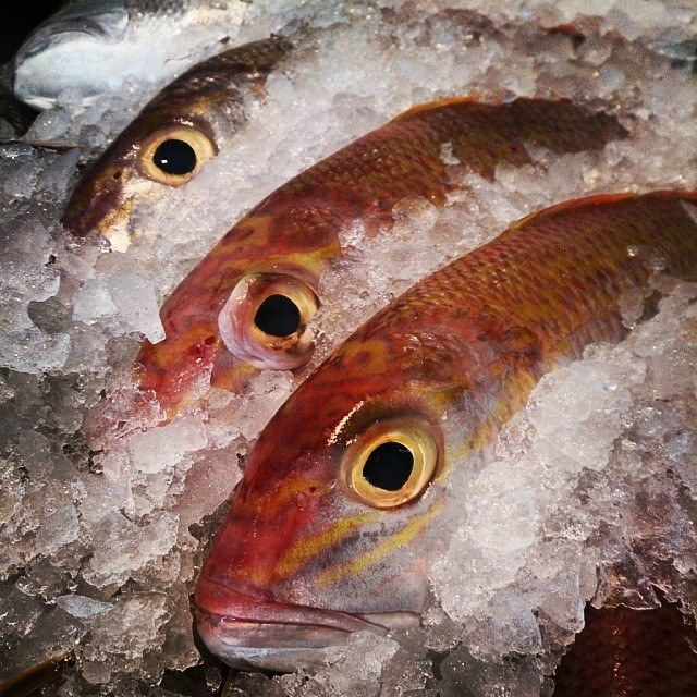 Goldband Snapper, often referred to as king snapper. absolutely delicious,mild taste, soft flesh & great on the bbq. #seafood #curulli's
