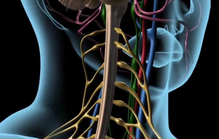AKUUTIN KIVUN HOITO -verkkokurssi on selkeä sairaanhoitajille suunniteltu kokonaisuus. Visuaalinen ilme, 3D-animaatiot ja videot on huolella valittu rikastamaan oppimiskokemusta. Kurssi jakaantuu seitsemään osaan, joissa paneudutaan kivun tunnistamiseen ja arviointiin, kivun lääkkeettömään hoitoon ja lääkehoitoon, kirjaamiseen sekä yhteistyöhön muiden alan ammattilaisten kanssa. Lisäksi kurssi sisältää harjoituksia ja lopputentin. Asiantuntijatyöryhmä Elina Tiippana erikoissairaanhoitaja…