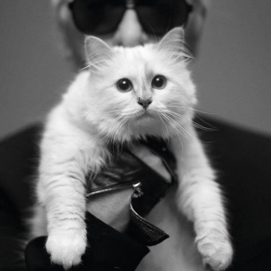 Miau....Choupette