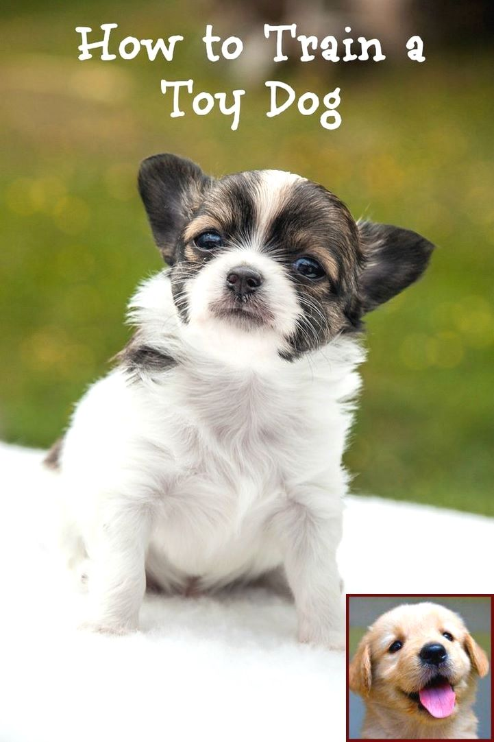 1 Have Dog Behavior Problems Learn About House Training A Puppy How Long Does It Take And Dog Training Cours Puppy Training Guide Puppy Training Free Puppies