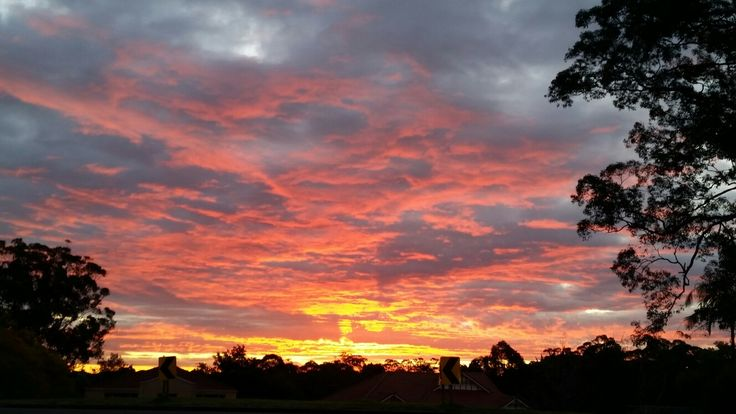 Beautiful. 26 August. West Pennant Hills
