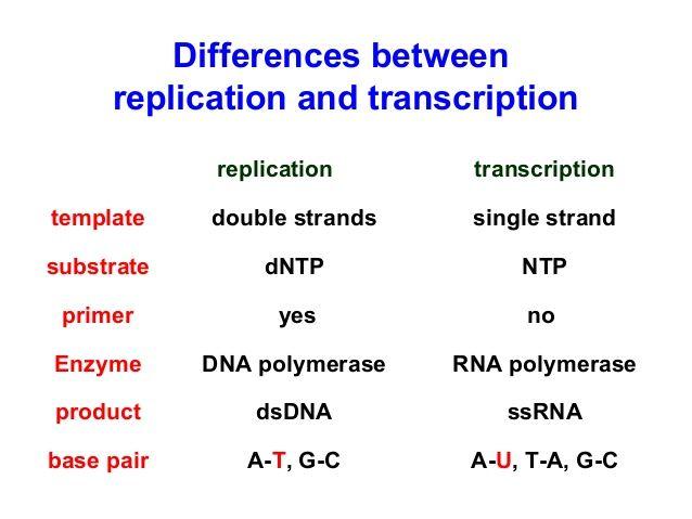 108 best human biology unit 1 stuff images on pinterest ap dna replication vs rna transcription ccuart Images
