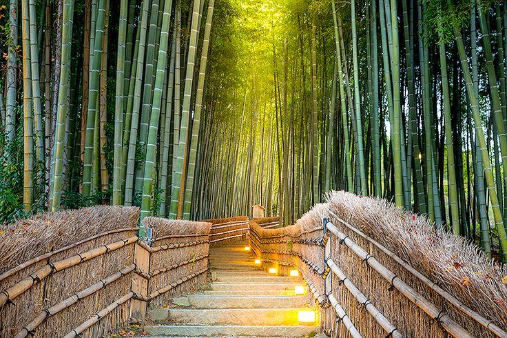 Bambuskogen i Arashiyama #kyoto #japan #bambuskog #arashiyama #travel #resa #semester