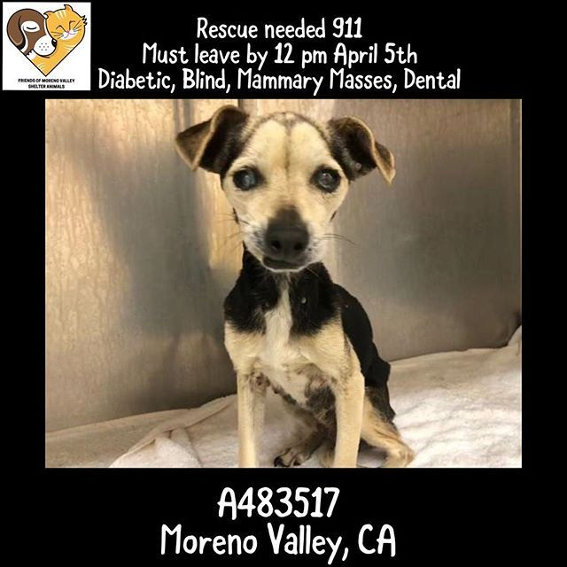 Pin By Friends Of Moreno Valley Shelter Animals On Urgent Animals