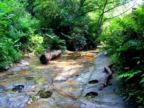 Erdők Hangjai - Relaxation