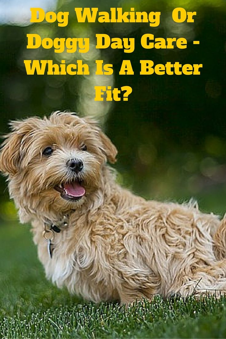 Dog Walking Versus Doggy Day Care – How To Decide Which Is A Better Fit?