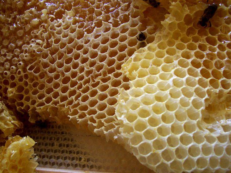 Usted sabe sin duda que las abejas también crean hexágonos, saben bien que pueden almacenar la mayor cantidad de miel de esa forma con la menor cantidad de cera. […] Los modelos de benceno, naftaleno y antraceno especialmente, son, en efecto, maravillosas. Cuando miro esas imágenes siempre me pongo a pensar en los panales de …