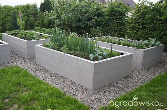 Warzywa uprawiane w skrzyniach, pojemnikach - strona 23 - Forum ogrodnicze - Ogrodowisko