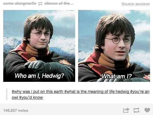 "When they figured out that maybe he was a bit dumb as well. | 26 More Times Tumblr Had Serious Questions About ""Harry Potter"""
