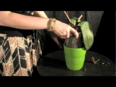 Watch this video on how to water your Orchids 'on ice'