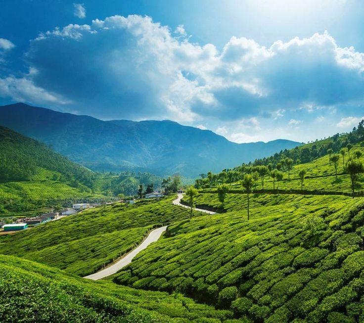 Wayanad, eine wahnsinnig tolle Region und absolutes Muss in Kerala. Klar, dass hier unser Pfeffer herstammt